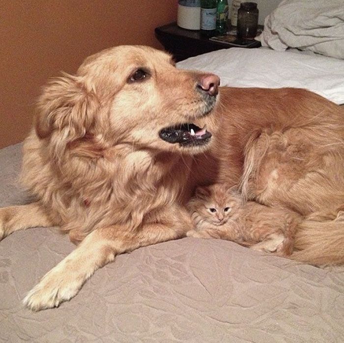 96 Adorable Animals Who Have Brothers From Other Mothers