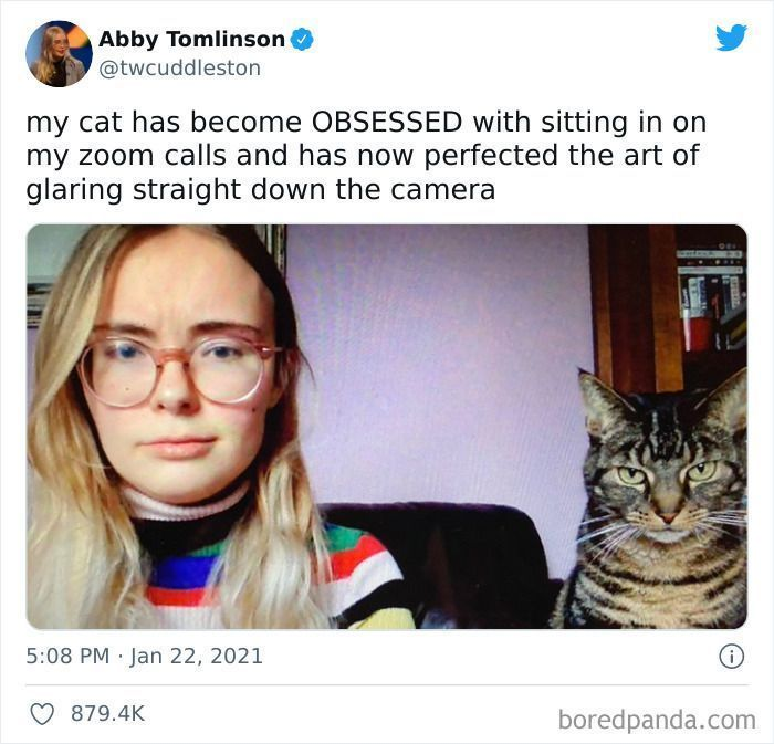 98 Times Cats Cracked Us Up (New Pics)