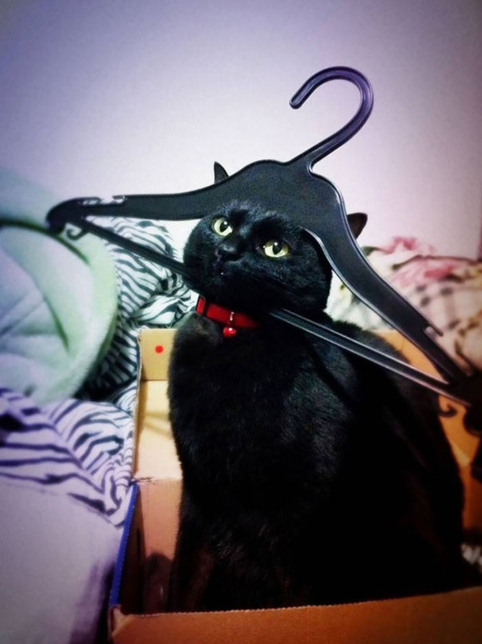 Cat Owners Share The Weirdest Places Their Cats End Up In (50 Pics)