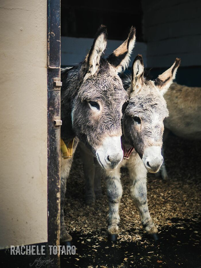 I Celebrate The Beauty Of Donkeys By Capturing Their Photos (50 Pics)