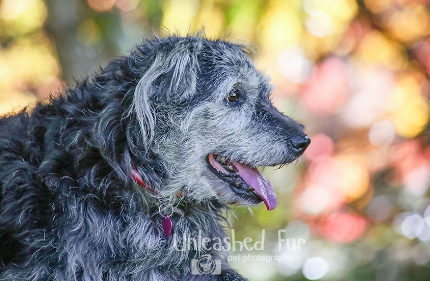 I Photograph Senior Dogs On Their Last Day On Earth (30 Pics)