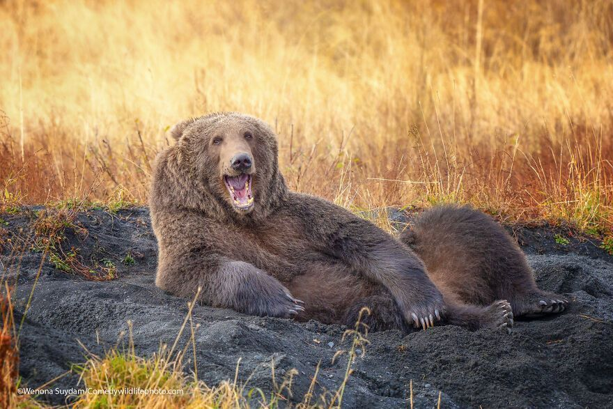 The 2021 Comedy Wildlife Photography Awards Have Just Announced Their Finalists, And Here Are 40 Of The Funniest Photos To Crack You Up