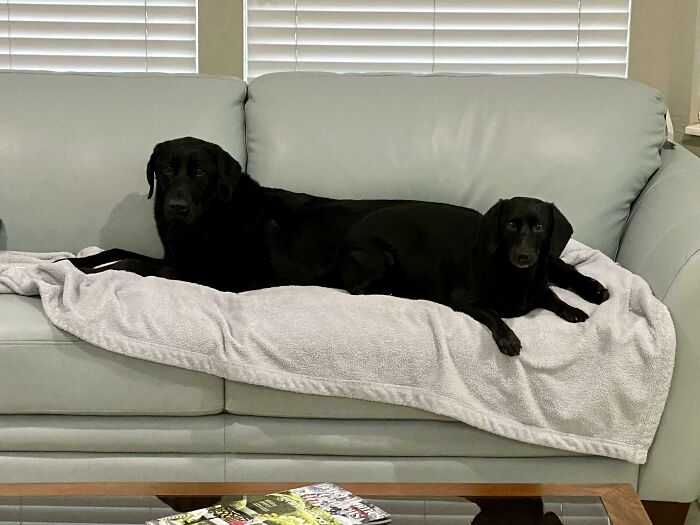 """""""What's Wrong With Your Dog?"""": People Are Sharing Pics Of Their Dogs Acting Bizarre (50 New Pics)"""