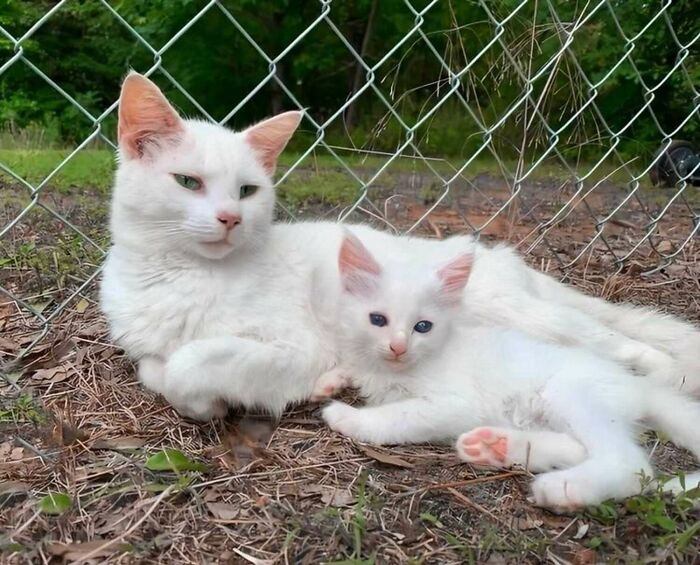 Pregnant Woman And Cat Give Birth At The Same Time After She Found The Pregnant Cat And Fostered Her