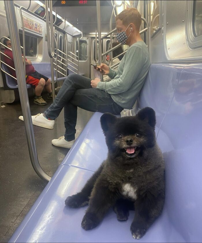 103 Cute Dogs Living Their Best Lives