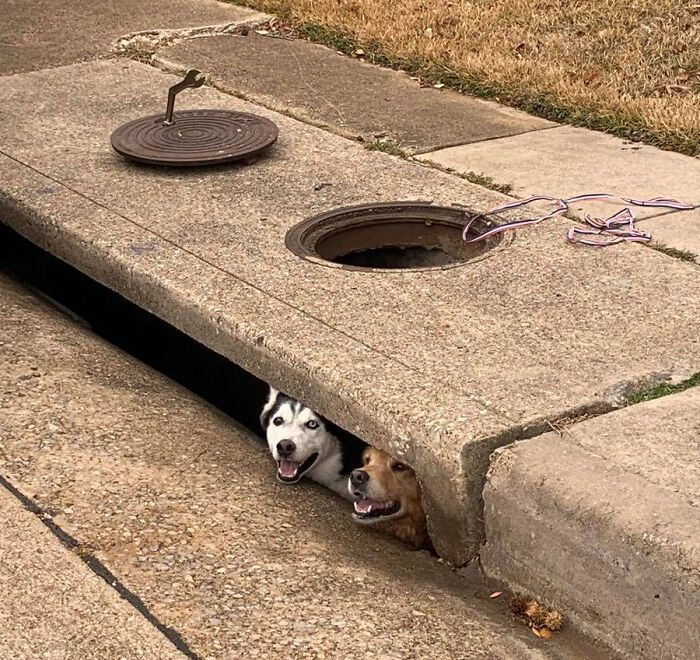 130 Funny Animals Who Somehow Got Stuck And Required Immediate Assistance