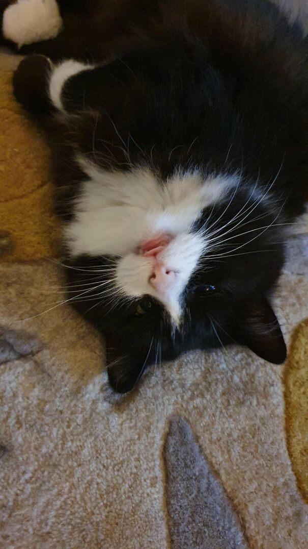 These 41 Cats Are Winning People's Hearts By Blepping In The Most Adorable Way, Shared By Owners In This Online Group