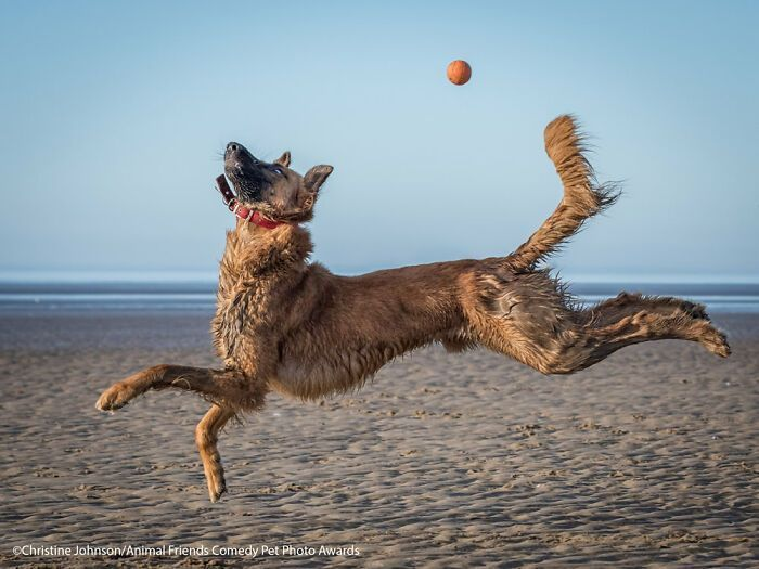 If You're Having A Bad Day, These Finalists From Comedy Pet Photography Awards 2021 Are Bound To Make It Better (35 Pics)